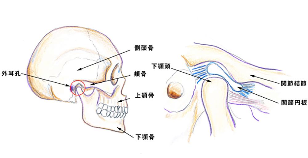 顎関節症が発症するメカニズム